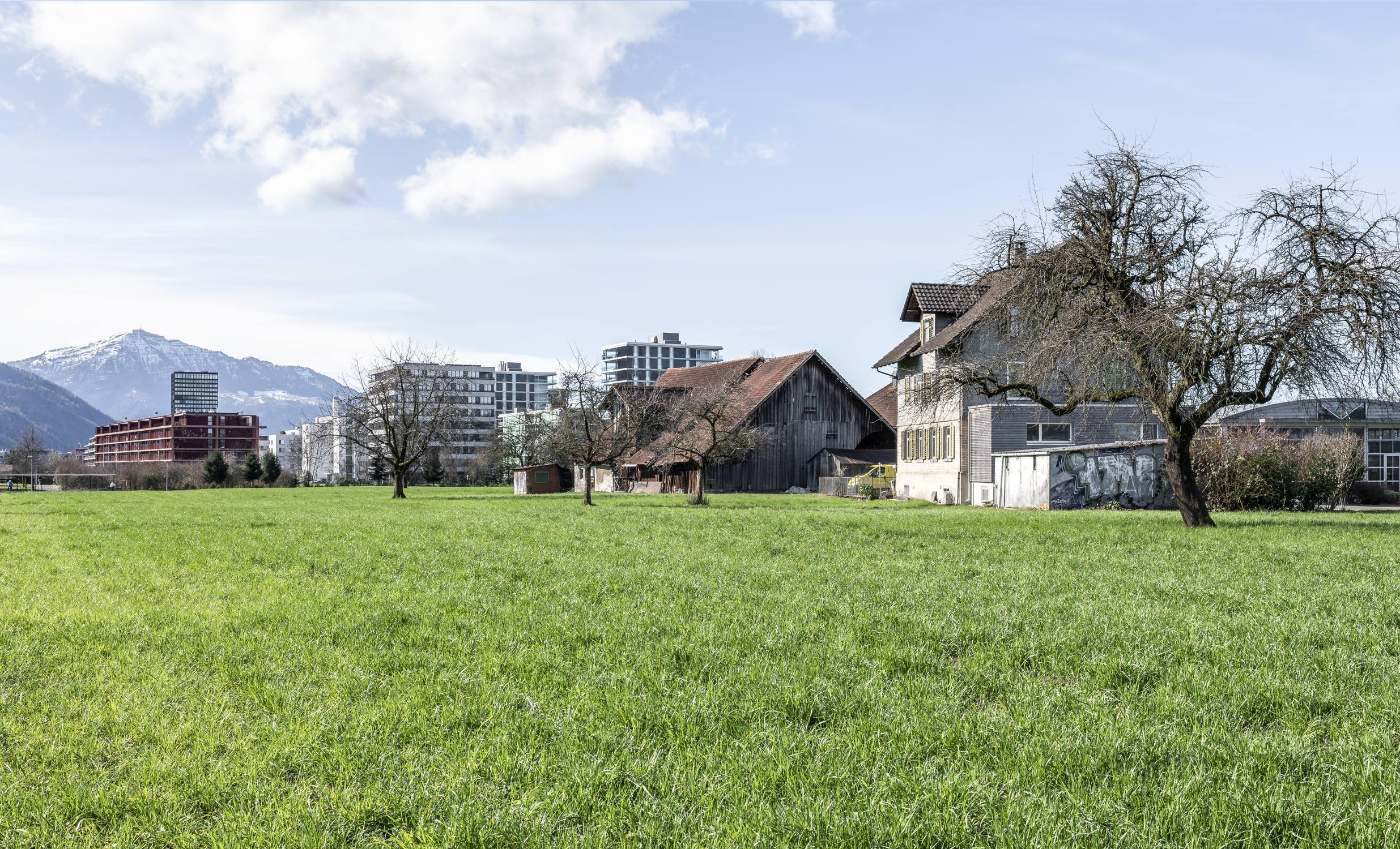 Wiese Unterfeld mit Häusern der Stadt Zug fotografiert von Regine Giesecke